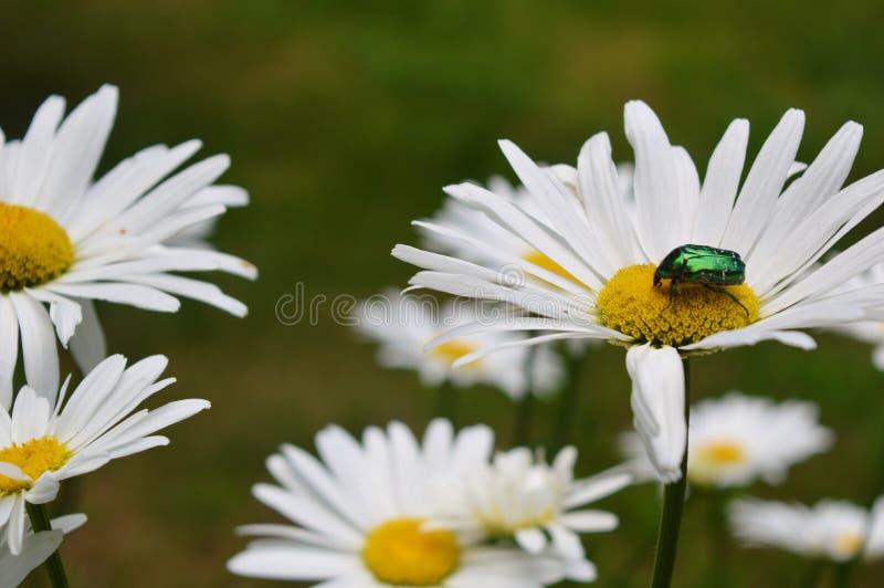 Anomalie sur une fleur photos libres de droits