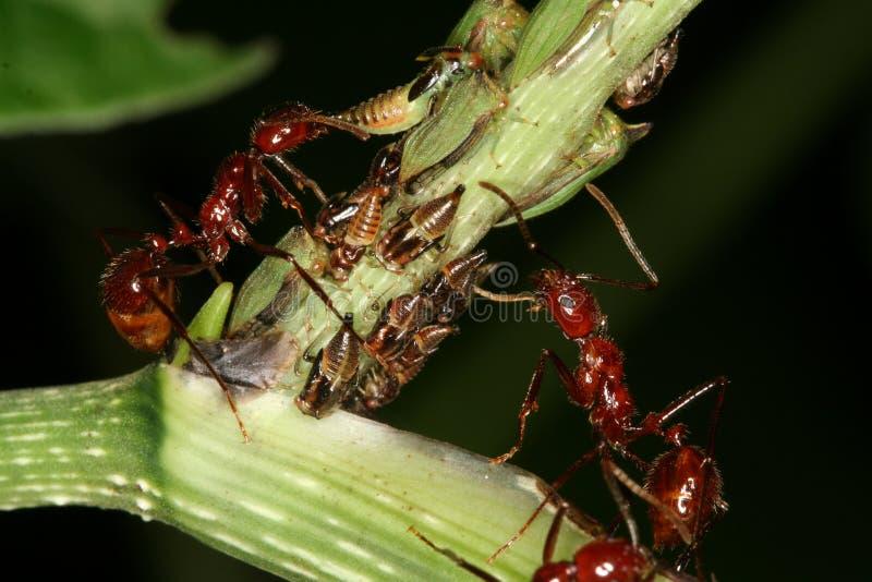 Anomalies et fourmis photographie stock libre de droits