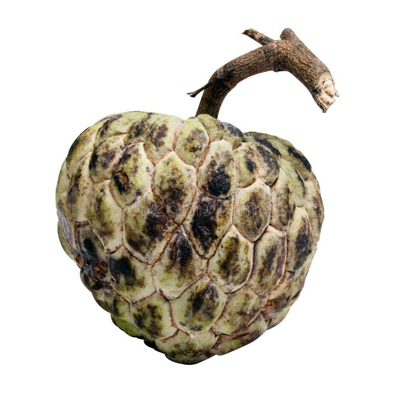 anone frucht mit ausschnittspfad stockbild bild von asien nachtisch 22231463. Black Bedroom Furniture Sets. Home Design Ideas