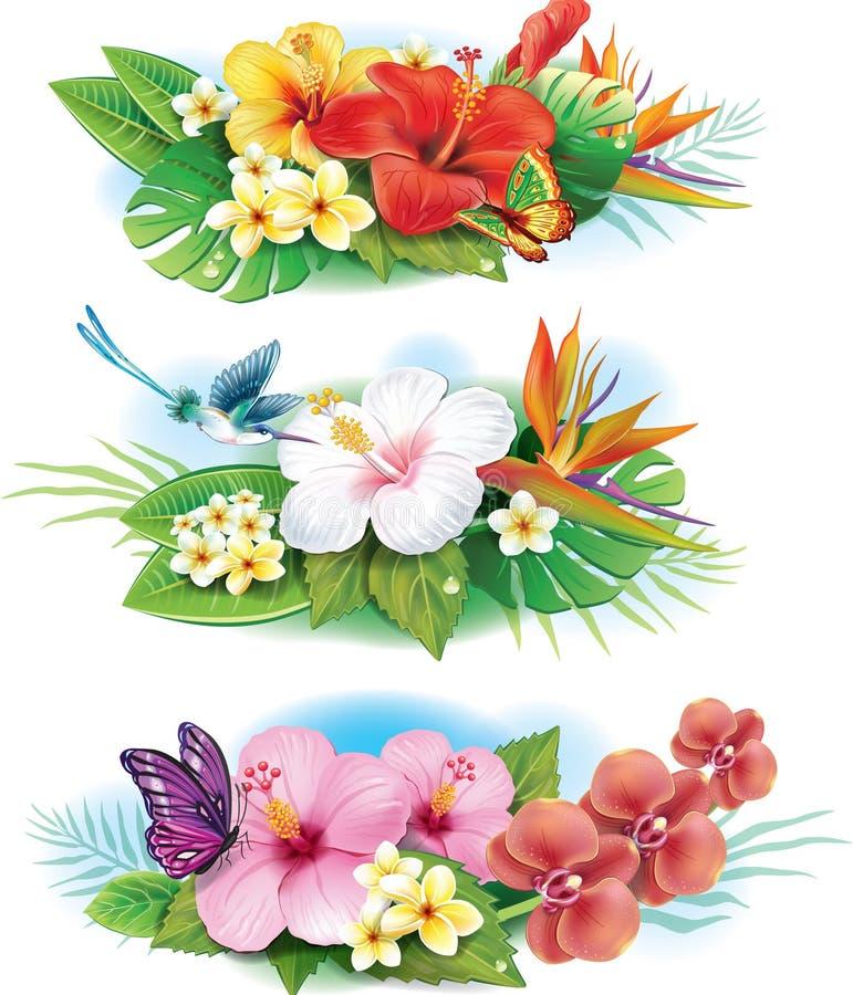 Anordnung von den tropischen Blumen stock abbildung