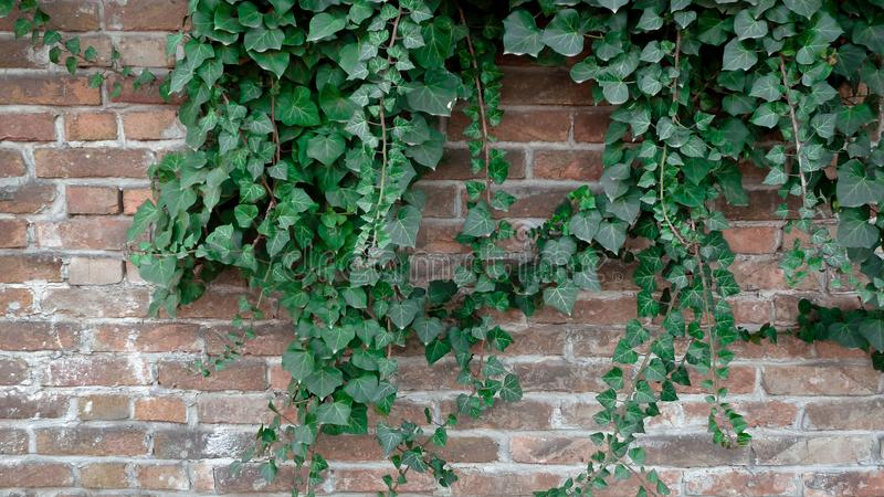 Another green on the wall stock photography
