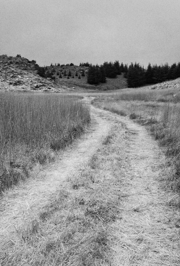 Another Hiking Path royalty free stock image