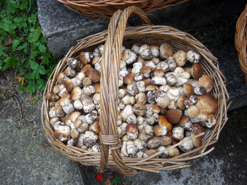Download Another Mushroom Chest Stock Photography - Image: 16381452