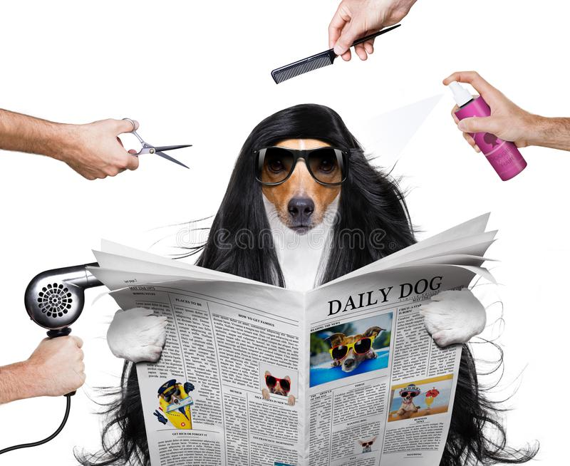 Ansa hunden på frisörerna royaltyfri bild