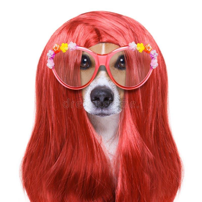 Ansa hunden på frisörerna arkivfoto