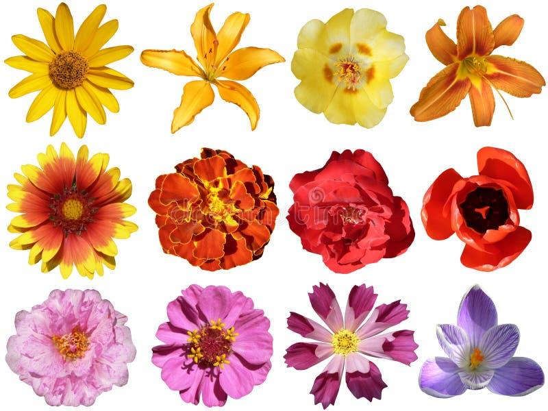 Ansammlung Blumen stockbild