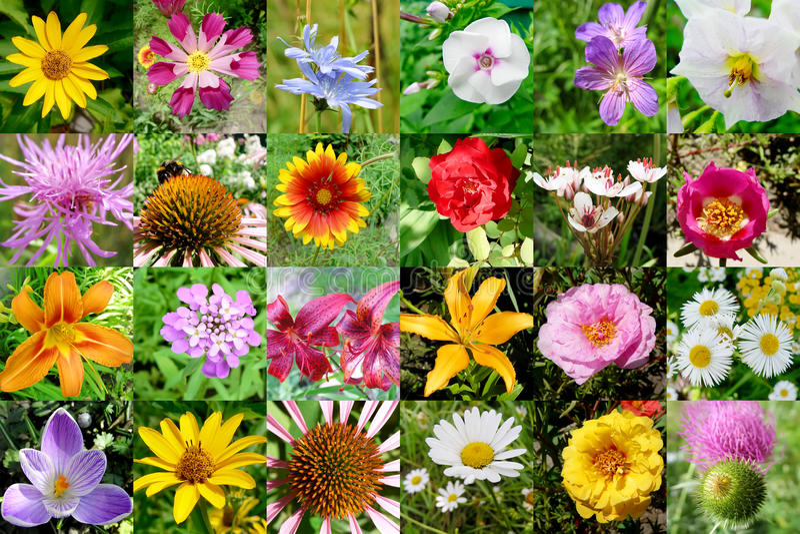 Ansammlung Blumen lizenzfreie stockbilder