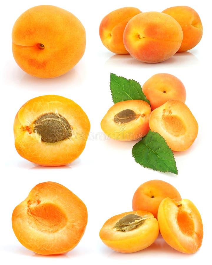 Ansammlung frische Aprikosenfrüchte getrennt stockfotos
