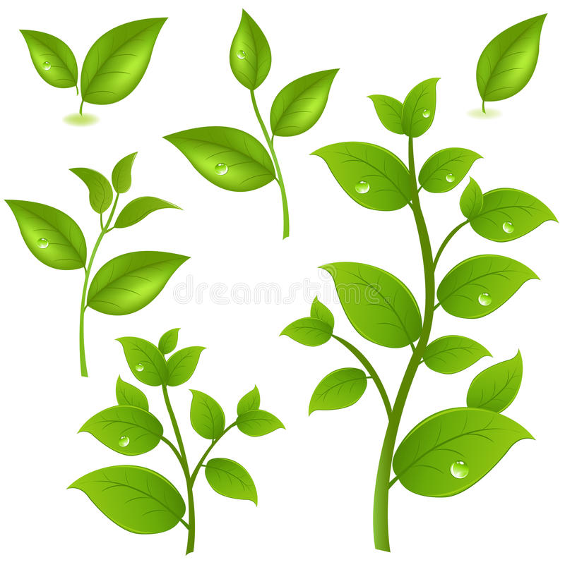 Ansammlung grüne Zweige vektor abbildung