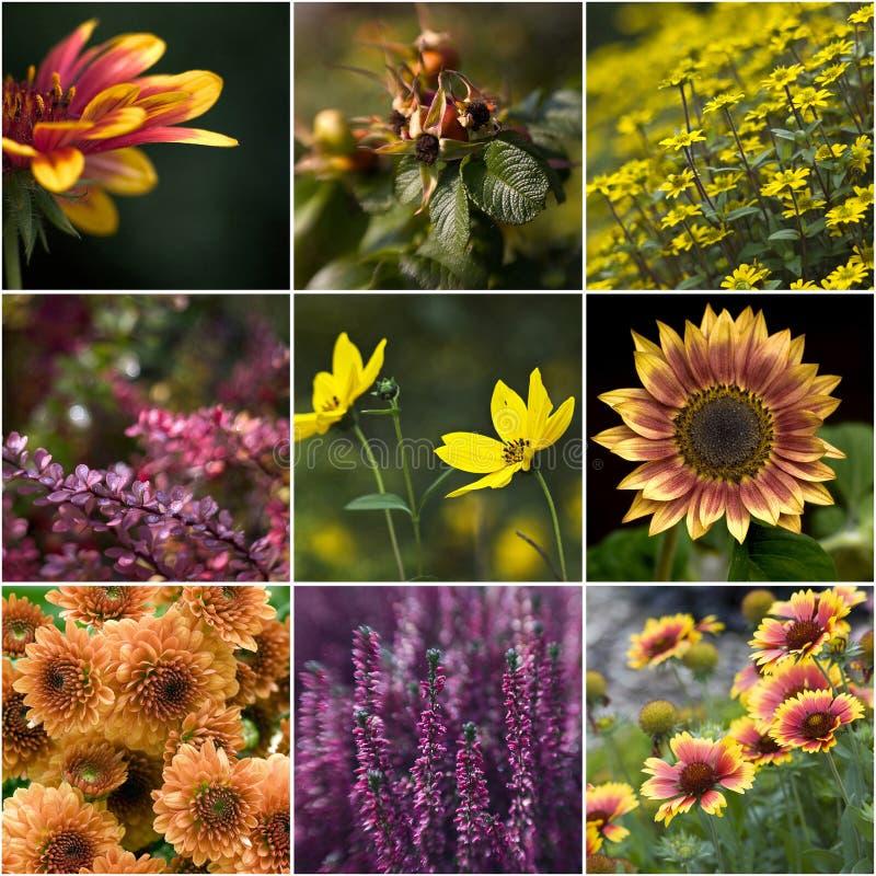 Ansammlung herbstliche Blumen stockfotos