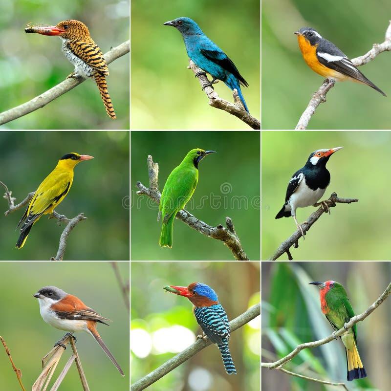 Ansammlung Vögel stockfotos