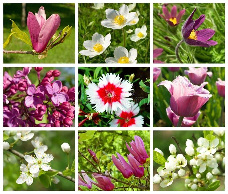 Ansammlung verschiedene Frühlingsblumen stockfotografie