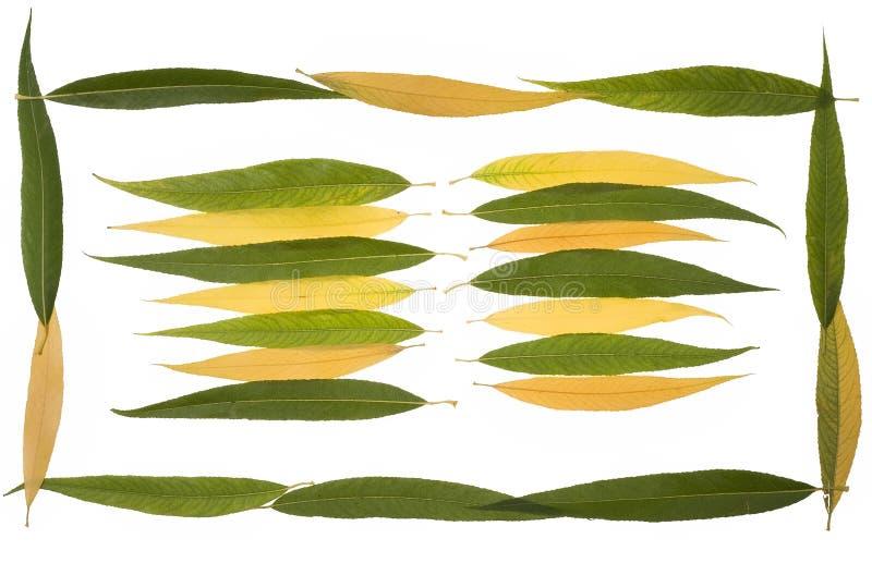 Ansammlungsherbstblätter der weinenden Weide lizenzfreies stockbild