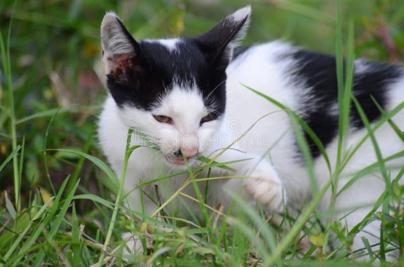 Anscheinend mögen Katzen auch Gras essen lizenzfreies stockbild