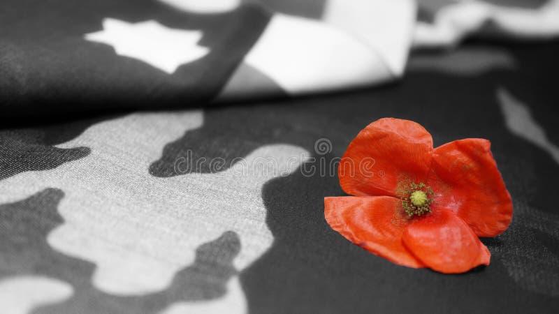 Anschlagtafel getrennt auf Weiß Poppy Flower Usa Flag lizenzfreie stockfotografie