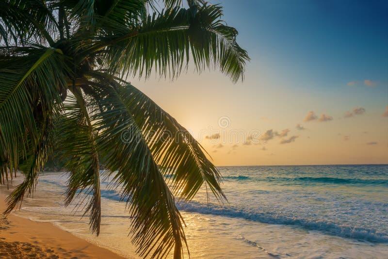 Anse在praslin海岛塞舌尔群岛上的乔其纱海滩 免版税库存照片