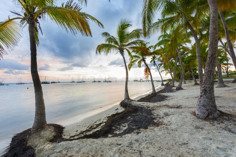 Anse Chamapgne in Guadeloupe royalty free stock photo