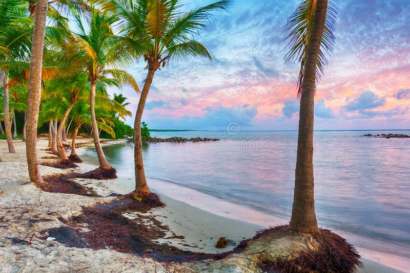 Anse Chamapgne beach  in Guadeloupe stock photo