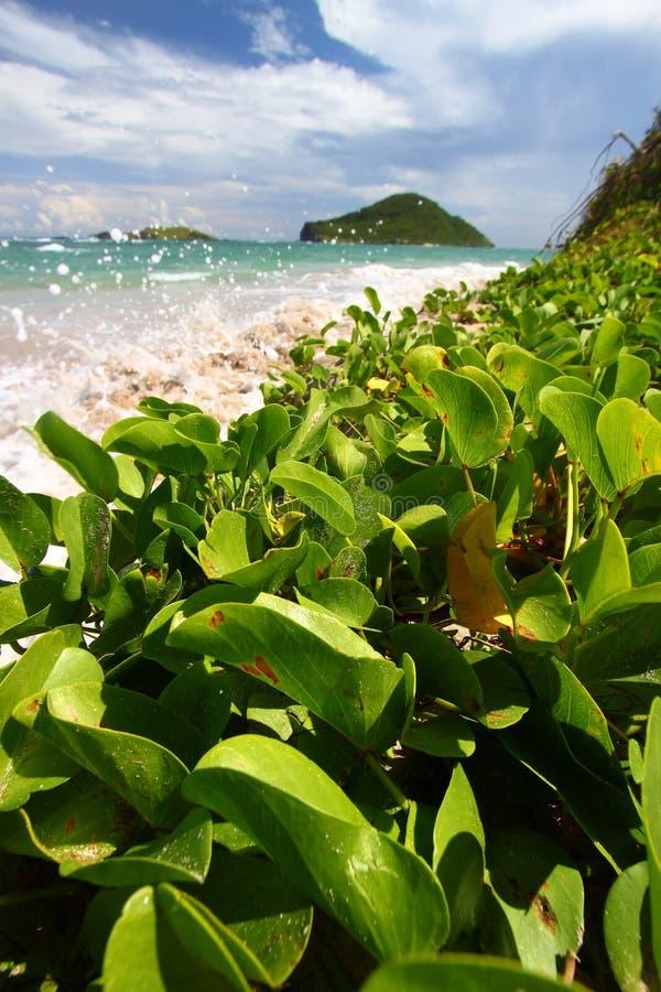 Anse de Sables Beach - St Lucia stock images