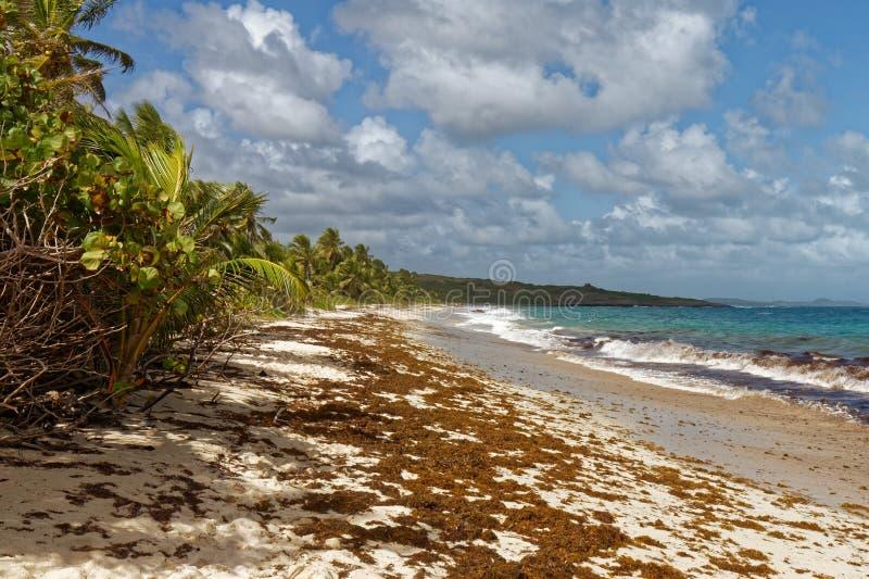 Anse Grosse Roche - Caraïbisch strand - Le Marin - Martinique stock foto's