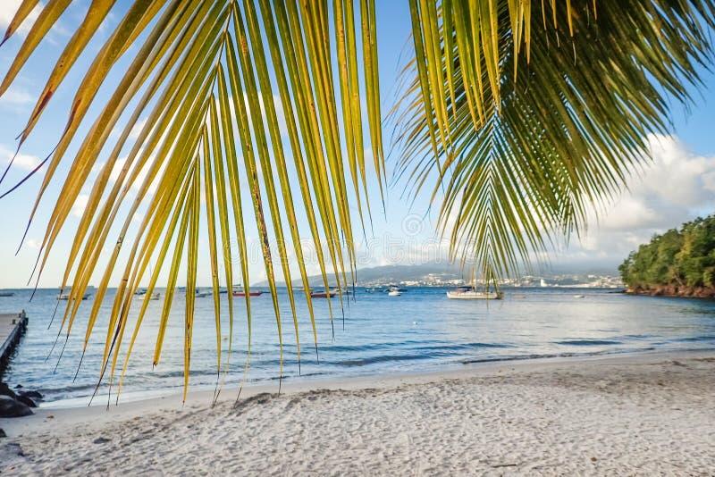 Anse a l'Ane海滩拥有棕榈树、码头和游艇,享有法国堡的美景, 库存图片