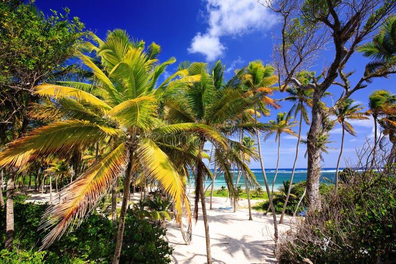 Anse Michel Beach nära lockChevalier - Sainte Anne - Martinique arkivbilder