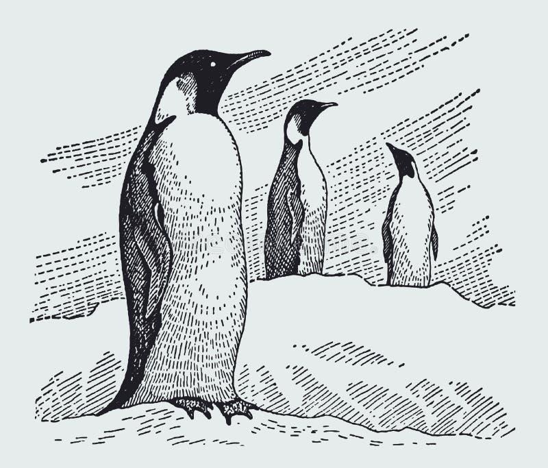 Anseende för forsteri för aptenodytes för tre kejsarepingvin i ett snöig landskap vektor illustrationer