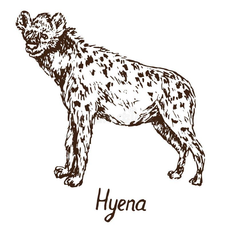 Anseendet för den prickiga hyenan, utdraget klotter för hand, skissar royaltyfri illustrationer