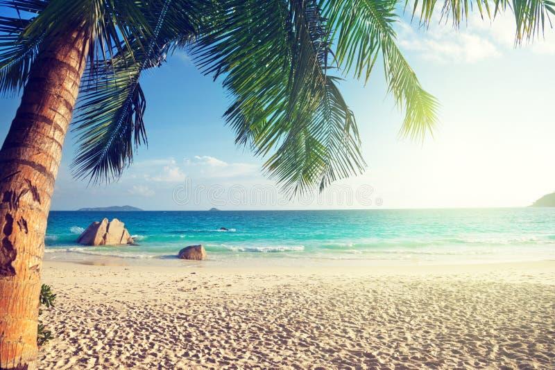 Anselazio strand, Praslin-eiland stock fotografie