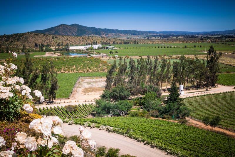 Ansicht über den Weinberg, Weinkellerei mit weißen Rosen lizenzfreie stockfotos
