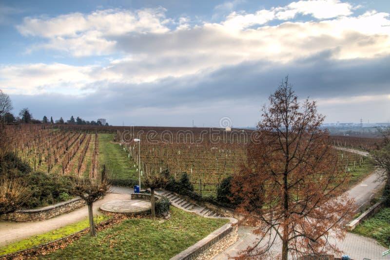 Ansicht über die Weinberge in Hochheim, Deutschland lizenzfreies stockbild