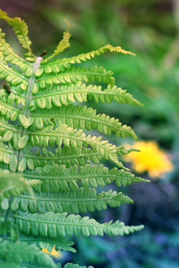 Ansicht über grünen Farn verlässt unter Sonnenlicht im Wald Farne herein lizenzfreie stockbilder