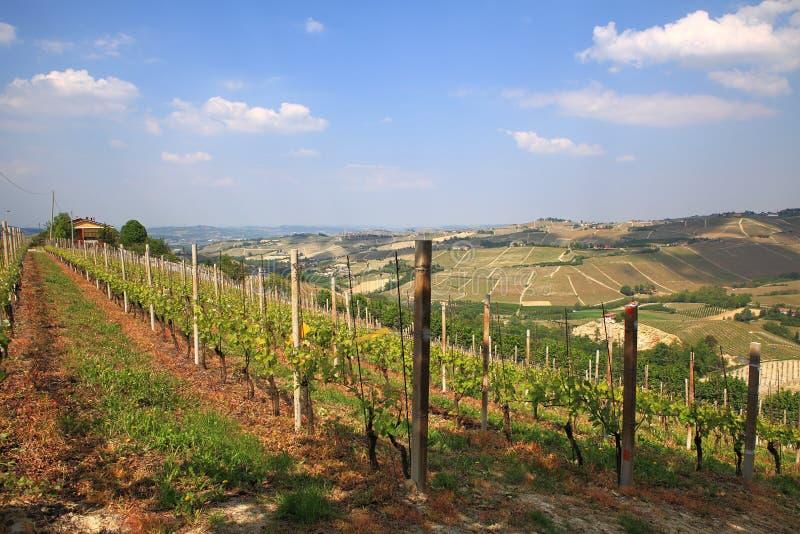 Ansicht über Hügel und Weinberge von Piedmont, Italien. lizenzfreie stockbilder