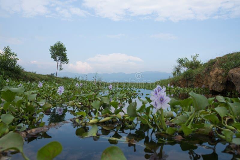Ansicht über inle See mit der purpurroten Blume gesehen von der Froschperspektive in Myanmar lizenzfreie stockbilder