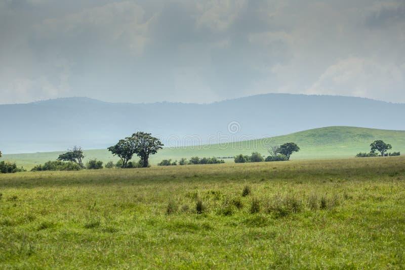 Ansicht über Ngorongoro-Krater, Tansania, Ostafrika (UNESCO-Welt stockfotos