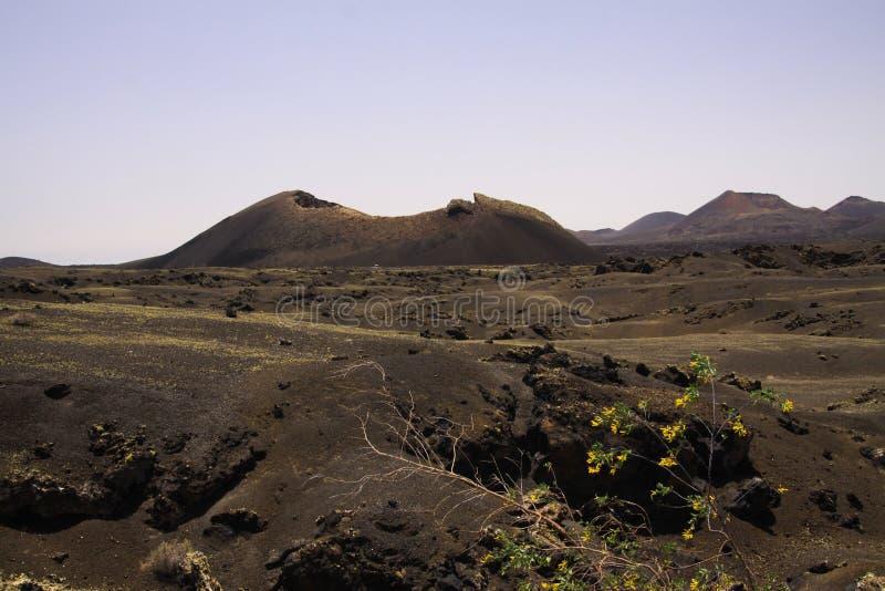 Ansicht über schwarzes Lavafeld mit dem Kontrastieren von isoalted gelben Blumen auf Krater des Vulkans - Timanfaya NP, Lanzarote stockbilder