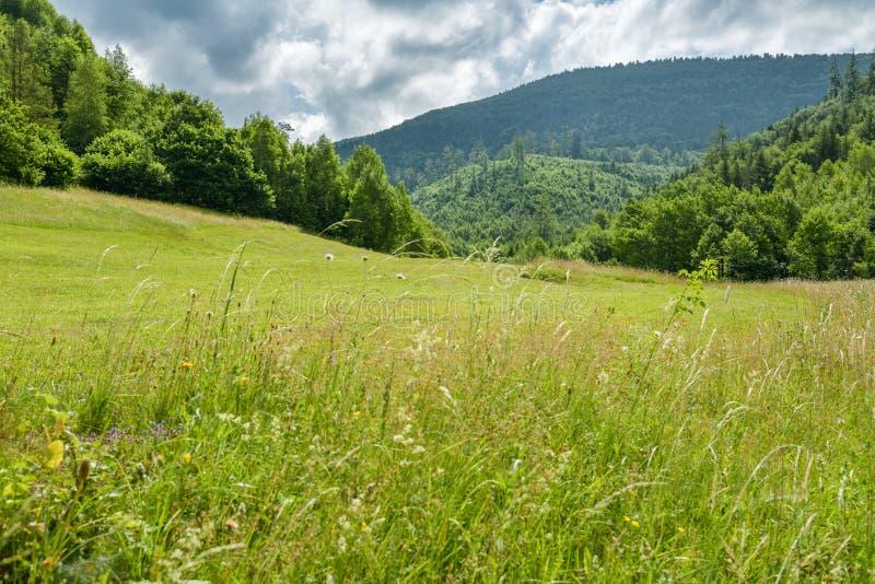 Ansicht über Spitze Velka Raca in Bergen Kysucke Beskydy in Nord-Slowakei stockfotos