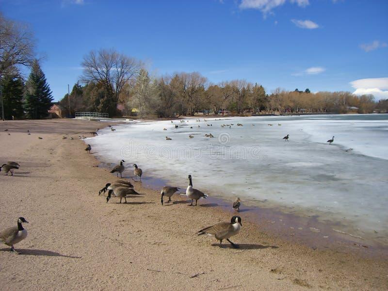 Ansicht über Ufer von einem gefrorenen See lizenzfreie stockfotos