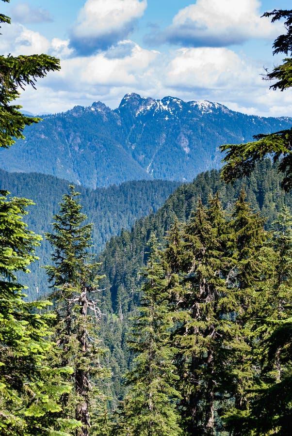 Ansicht auf vom Waldhuhn-Berg, vertikal stockfotografie