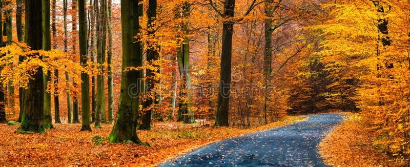 Ansicht der Asphaltstraße im schönen goldenen Buchenwald während des Herbstes stockfotografie