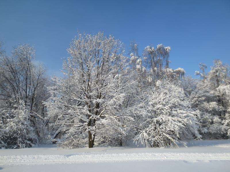 Ansicht der Bäume im Schnee an einem sonnigen Wintertag gegen den blauen Himmel stockbild
