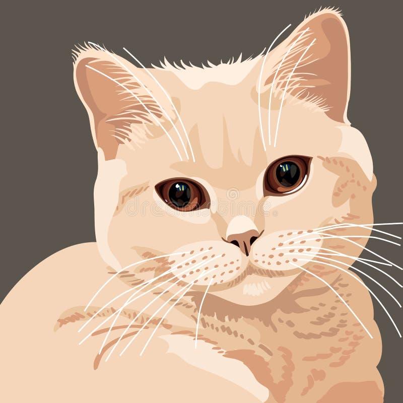 Ansicht der britischen lila Katzenahaufnahme lizenzfreie abbildung