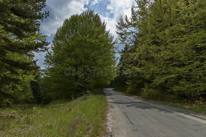 Ansicht der Frühjahrnatur mit grüner Lichtung, laubwechselnd Wald und Straße stockfotografie