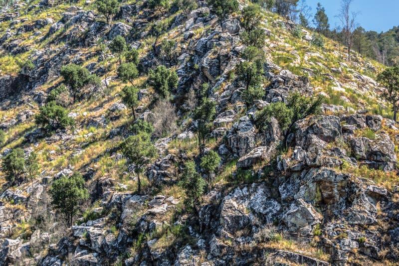 Ansicht der Gebirgslandschaft, der Klippe mit Felsen und der Vegetation lizenzfreies stockfoto