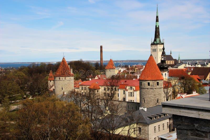 Ansicht der Hauben, Türme, Kathedralen, Gebäude der alten Stadt von der Festungswand in Tallinn, Estland lizenzfreie stockfotografie