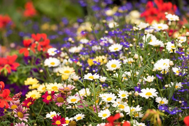 Ansicht der hellen wilden Blumen Nahaufnahme lizenzfreies stockbild