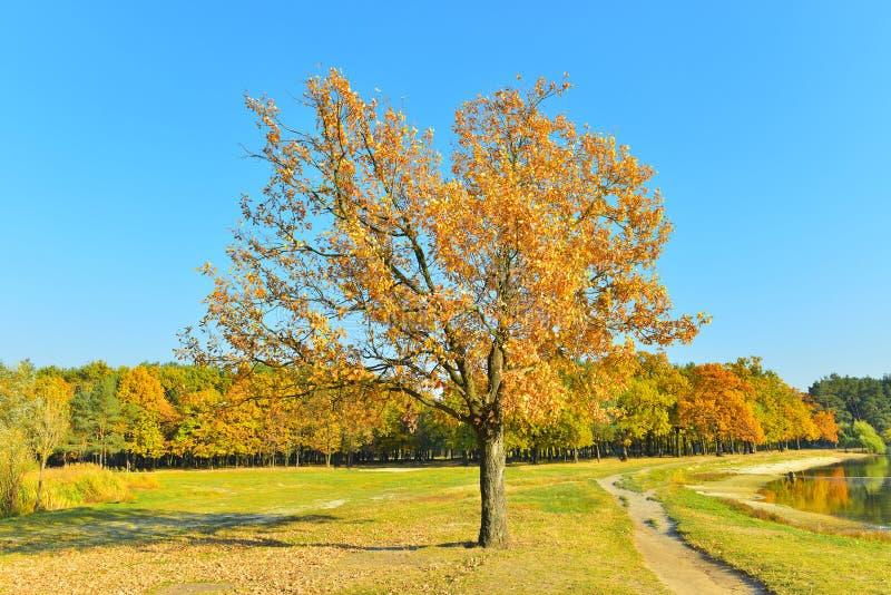 Ansicht der Herbstlandschaft im sonnigen Wetter stockbild