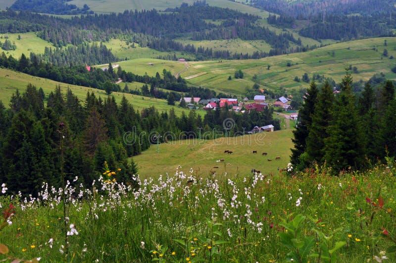 Ansicht der Karpatenberge, des Dorfs unter den Bergen und der Hügel, wilde Blumen lizenzfreie stockfotos