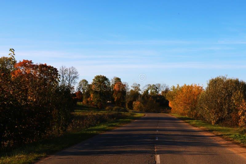 Ansicht der Straße und der Bäume an einem sonnigen vollen Tag lizenzfreie stockfotos