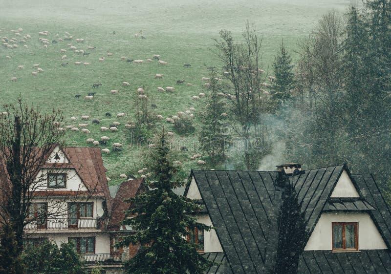 Ansicht des Dorfs in den Vorbergen der europäischen Berge in Polen Zakopane lizenzfreie stockfotos